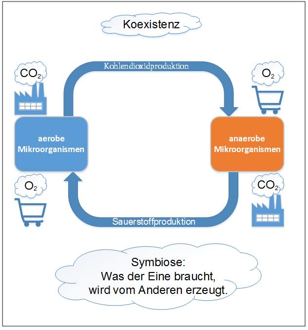 Abb. 4: aerobe und anaerobe Mikroorganismen in einem System, Koexistenz statt Konkurrenz