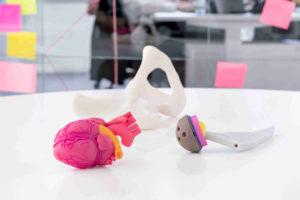 Prototypen physiologischer Modelle für den Lehrunterricht hergestellt im 3D-Druckverfahren Polyjet – BAM GmbH